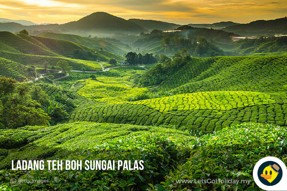 Cameron Highlands Attractions C Letsgoholiday My